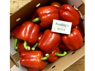 Red Peppers (5Kg Box)