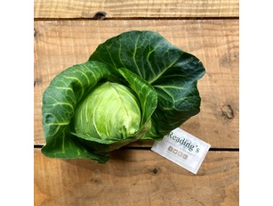 Hispi Cabbages (Each) (English)