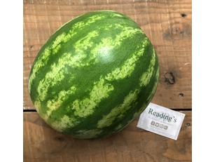 Water Melons (Each)