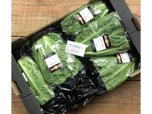 Cos Lettuces (Box 10)