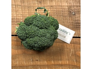 Broccoli (Per Head) (English)