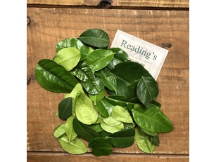 Lime Leaves (15g)