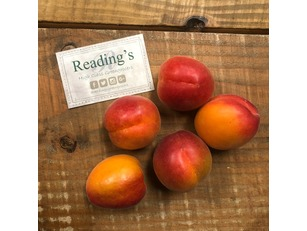 Apricots (5 Pack)