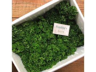 Curly Parsley (Box 20 Bunches)