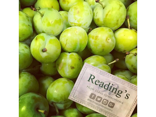 English Greengages (5 Pack)