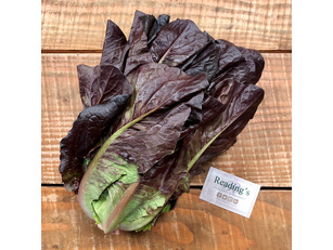 Red Cos Lettuce (Each)