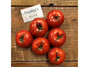 Salad Tomatoes (6 Pack) (Class 1)