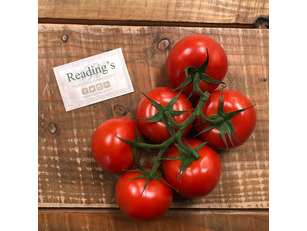 Vine Tomatoes (Bunch of 6)
