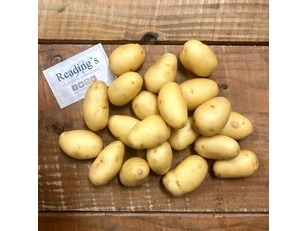Washed Mid Potatoes (1Kg)